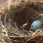 Apego ao ninho